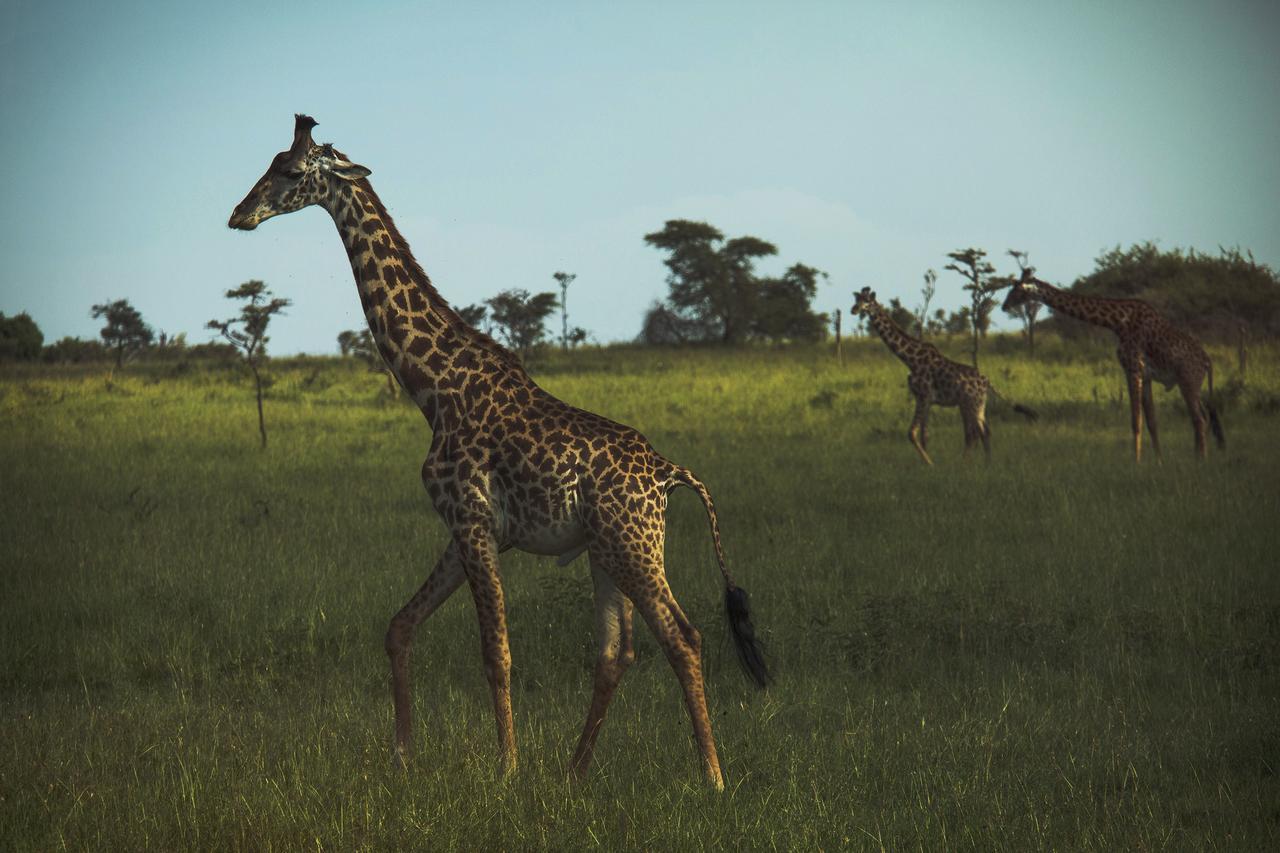 mikumi 3 days safari