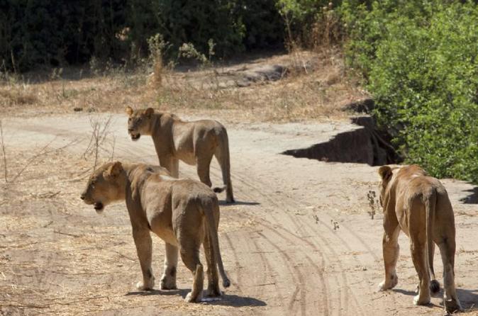 4-day-ruaha-national-park-safari-tour
